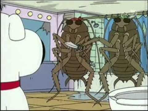 колко опасни могат да са хлебарките